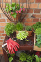 Various potted spice plants on terrace - GWF05788