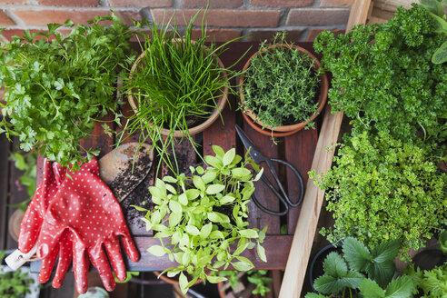 Gardening, herb garden, gardening tools, secateurs and gloves, pots on planting table, kleinblättriges Basilikum (Ocimum basilicum), chive (Allium schoenoprasum),Thyme, glatte Petersilie (parsley, Petorselinum crispum), strawberries (Fragaria), Zitronen-Thymian (lemon-scented thyme, Thymus × citriodorus), krause Petersilie (parsley, Petroselinum crispum) - GWF05791