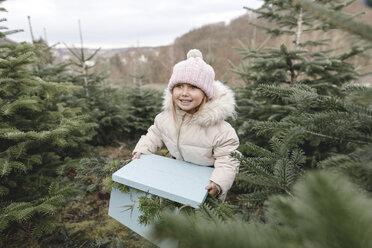 Arnsberg, NRW, Deutschland. Ein kleines lachendes Mädchen mit einem Geschenkkorb auf der Weihnachtsbaum-Plantage - KMKF00737