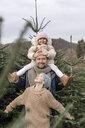 Arnsberg, NRW, Deutschland. Ein lachender Vater mit zwei Kindern auf der Weihnachtsbaum-Plantage - KMKF00743