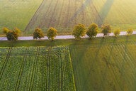 Germany, Bavaria, tree-lined country road near Dietramszell at sunrise, drone view - SIEF08347