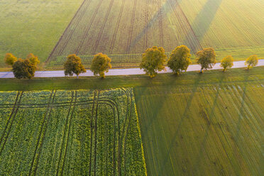 Landstraße mit Baumreihe bei Sonnenaufgang, bei Dietramszell, Drohnenaufnahme, Oberbayern, Bayern, Deutschland - SIEF08347