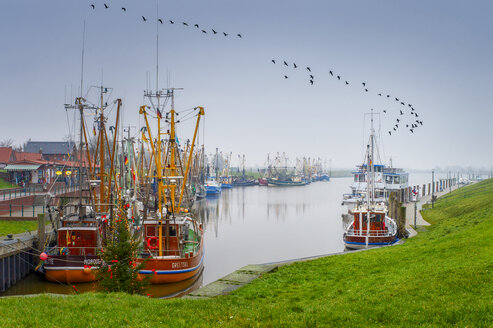 Germany, Lower Saxony, Krummhorn, Greetsiel, Barnacle geese flying over the fishing harbour - FRF00799