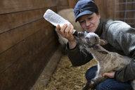 Female farmer feeding baby lamb with bottle in barn - HEROF07393