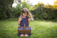 Smiling girl crouching on a meadow with wickerbasket of plums - LVF07677
