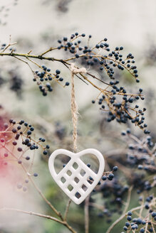 Heart shaped porcelain ornament hanging from privet (Ligustrum) leafless branch amongst purple berries and pink flare in garden - LSF00081