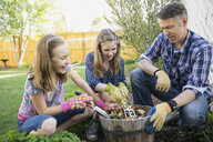 Father and daughters planting flowers in garden - HEROF07976