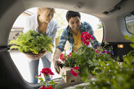 Couple loading flowers into back of car - HEROF08000