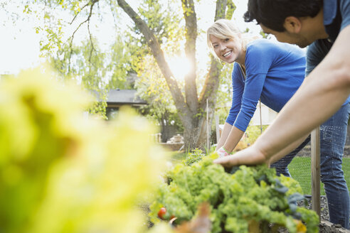 Couple tending to plants in vegetable garden - HEROF08054