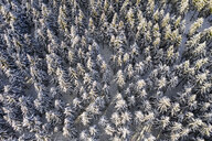 Germany, Hesse, Taunus, Aerial view of coniferous forest in winter - AMF06731
