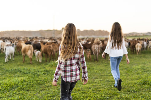 Back view of girls herding a goat herd on pasture - ERRF00696