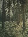 Germany, Tuebingen, forest - LVF07710