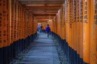 People walking through red torii gates, Kyoto, Japan. - MINF10080