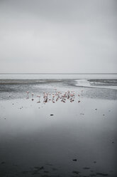 Namibia, Walvis Bay, flamingos in the sea - LHPF00418
