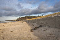 Germany, Mecklenburg-Western Pomerania, Darss, Ahrenshoop, West beach - KEBF01057