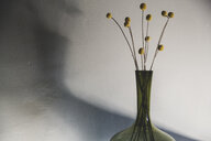 Close up of delicate dried Pineapple Flowers in green glass vase. - MINF10274