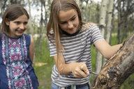 Curious tween girl friends carving tree - HEROF11546