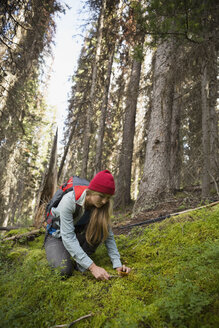 Female hiker cutting mushroom in woods - HEROF12365