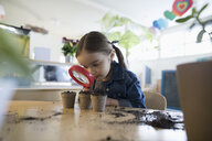 Curious preschool girl student with magnifying glass examining growing seedling plants - HEROF12755