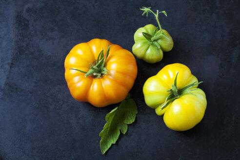 Three Azoychka tomatoes on dark ground - CSF29222