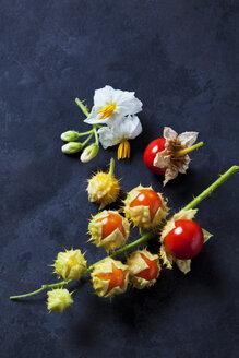 Litschi Tomaten, Tomaten (Solanum sisymbriifolium), Zweig, Blüten, Stachel,Herkunft Süd und Mittelamerika, rot, grün, dunkler Untergrund - CSF29246