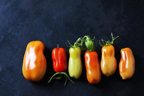 San Marzano Tomaten (Solanum lycopersicum), Flaschentomaten, italienische Tomaten, rot, grün,  dunkler Untergrund - CSF29285