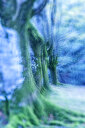 Enchated beech forest, close up - DSGF01788