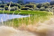 Spain, Zamora Province, Lago de Sanabria Nature Reserve - DSGF01793