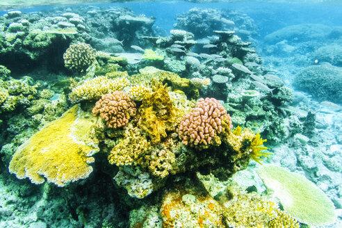 Australia, Queensland, Great Barrier Reef, Corals, close up - KIJF02253