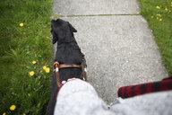 Seeing eye dog leading visually impaired woman walking on sidewalk - HEROF14637