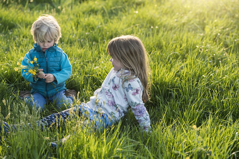 Two children sitting in meadow with dandelions and picking flowers - SBOF01684