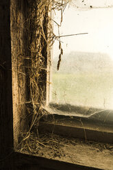Close-up of traditional farm barn window with straw, cobwebs and light coming through window - SBOF01690