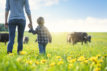 Mother and son holding hands and looking at cows grazing on a meadow with dandelions - SBOF01696