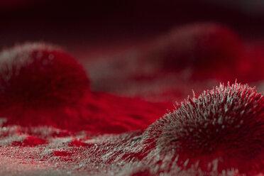 Microscopic red virus spore growth - HEROF15753
