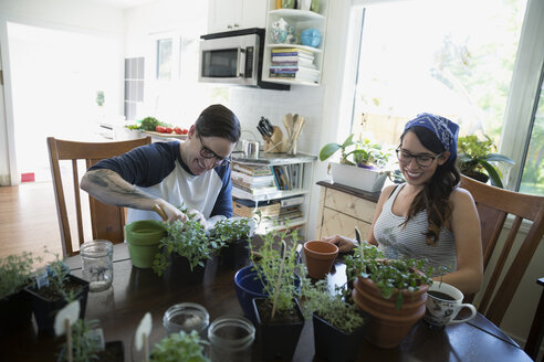 Couple potting plants at kitchen table - HEROF18528