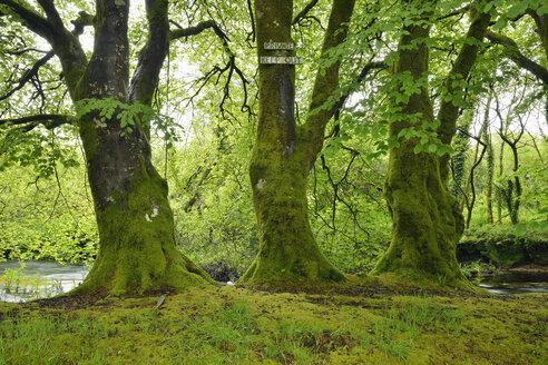Trees with private property sign. River Fowey, near Liskeard, near Golitha Falls. Cornwall, England. - RUEF02076