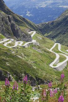 Switzerland, Ticino, Gotthard Pass, Fireweed in the foreground - GWF05849