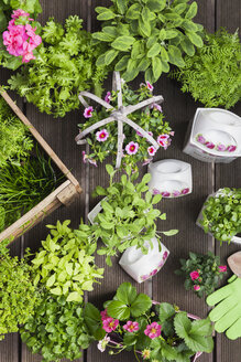 Planting herbs and flowers in to vintage storage pots for indoor farming - GWF05853