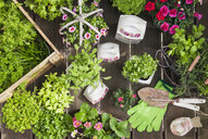 Planting herbs and flowers in to vintage storage pots for indoor farming - GWF05856