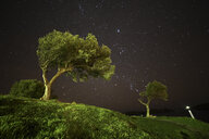 Spain, Cadaques, olive trees under starry sky - DSGF01817