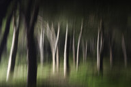 Blurred forest - DSGF01820