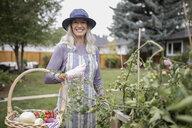 Portrait smiling senior woman gardening, harvesting vegetables in garden - HEROF19869
