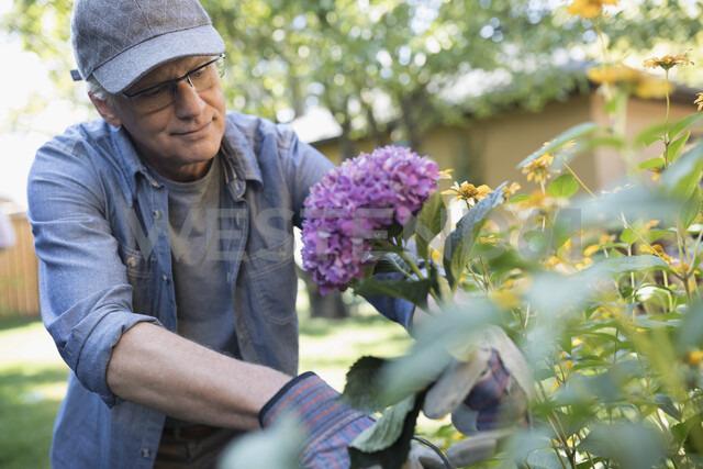 Senior man gardening, picking flowers in backyard garden - HEROF20139 - Hero Images/Westend61