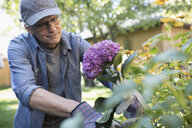 Senior man gardening, picking flowers in backyard garden - HEROF20139