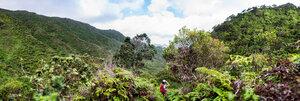 Hiker walking in rainforest, Moanalua Valley Trail, Oahu, Hawaii - ISF20499