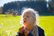 Girl blowing seeds from dandelion clock in field, backlit - CUF48670