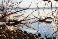 Icicles on bare branch, Lake Starnberg, Bavaria, Germany - CUF48802