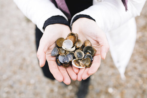 Woman's hands holding collected shells, close-up - KMKF00755