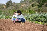 Couple planting lettuce seedlings in vegetable garden - GEMF02734