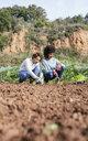 Couple planting lettuce seedlings in vegetable garden - GEMF02737